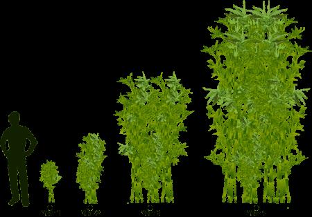 Coltivare Bamb Gigante In Italia.Coltivazione Del Bambu In Italia I Pro E I Contro