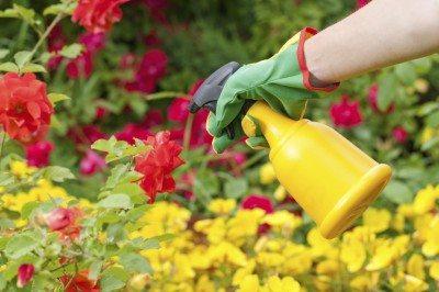 5 cose che dovrebbe bandire dal giardino chi ha a cuore l'ambiente