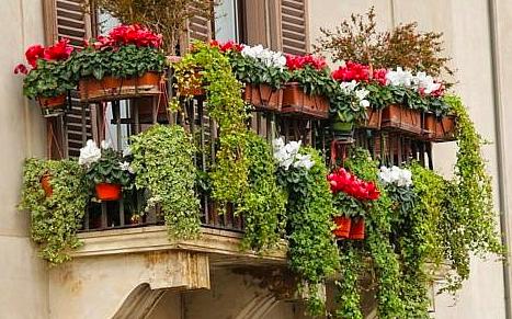 Quali sono le piante da balcone resistenti al freddo?