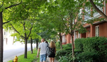 L'importanza della presenza di alberi nelle città