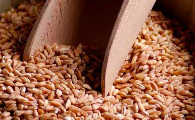 Il piccolo farro: un cereale sano e amico dell'ambiente
