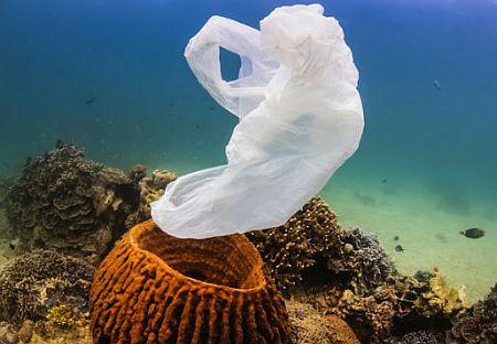Macro e microplastiche: anche i coralli di acqua fredda ne risentono