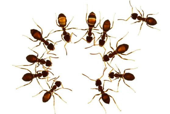L'importanza ecologica delle formiche