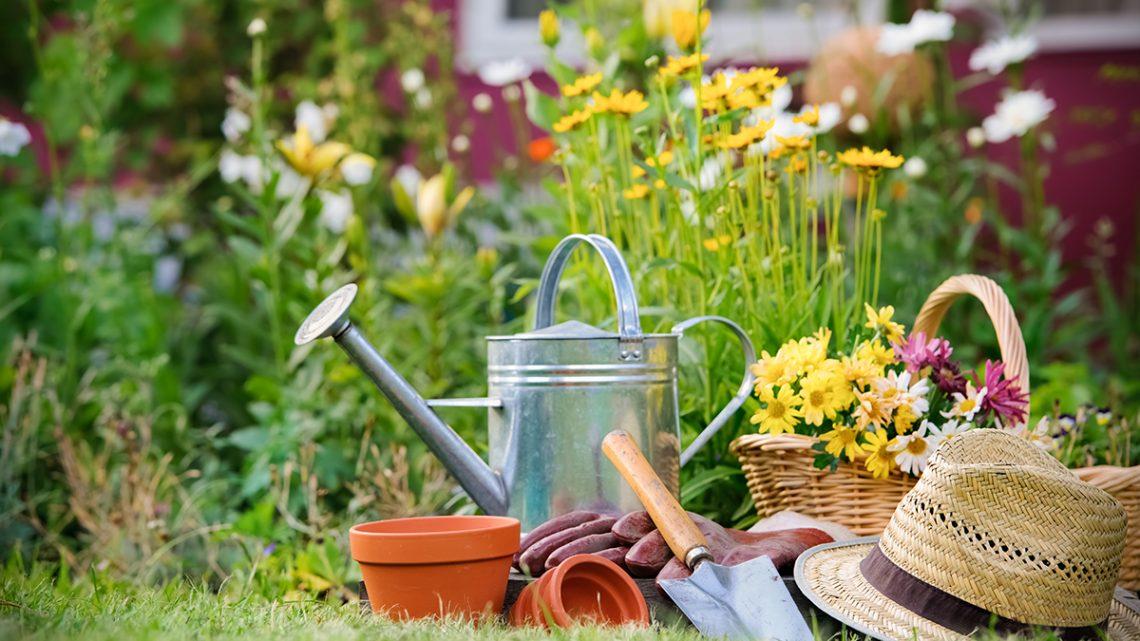 Giardinaggio ed estate: otto trucchi per combattere l'afa