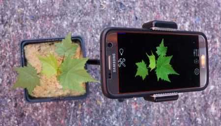 Plant Screen Mobile