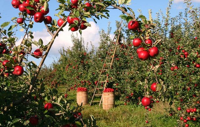 Perché i prodotti biologici sono così importanti per l'ambiente