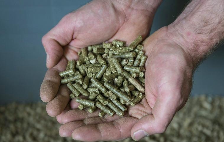 Carta a base di erba: un'alternativa ecologica alla carta tradizionale