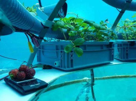 L'orto di Nemo: esperimento di coltura subacquea in Liguria